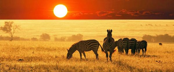 nuestro viaje ensueño africano