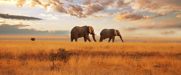 nuestro viaje mega safari